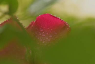 dew drops2