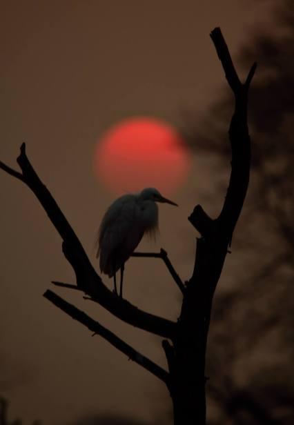 sunset_bharatpur